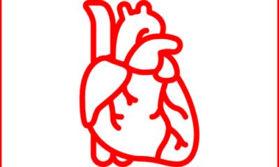 Sistema Circulatorio - Corazón